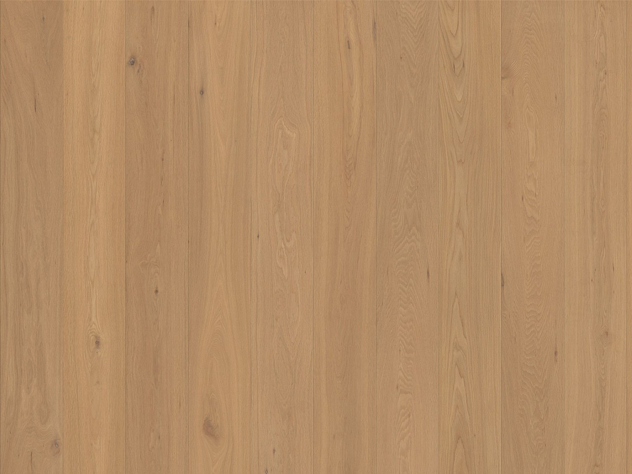 Kork Amora Wood – Domingo Oak lang 4V, 8F4001